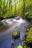 Laney River Royalty Free Stock Image