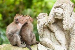 Lang-angebundene Macaques Lizenzfreies Stockbild