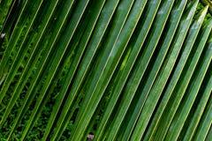 Lang blad in tuin Royalty-vrije Stock Foto's