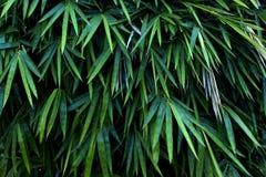 Lang blad in tuin Royalty-vrije Stock Fotografie