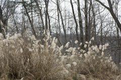 Lang bruin gras in de winter royalty-vrije stock afbeelding