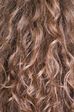 Lang bruin haar Stock Foto