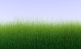 Lang Gras Stock Afbeelding