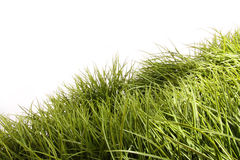 Lang gras dat in de wind blaast stock foto