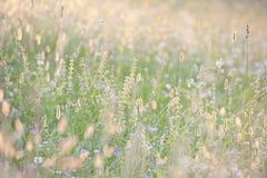 Lang gras in de zomerzonneschijn Royalty-vrije Stock Fotografie