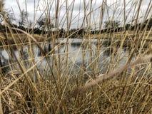 Lang gras die meer in de winter behandelen royalty-vrije stock afbeeldingen