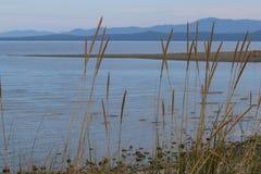 Lang gras door de oceaan, berg op achtergrond Royalty-vrije Stock Fotografie