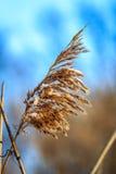 Lang gras met blauwe hemel Royalty-vrije Stock Foto's
