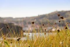 Lang gras op een duin van het strandzand Royalty-vrije Stock Fotografie