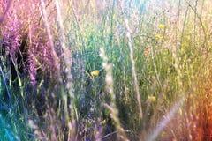 Lang gras op gebied Royalty-vrije Stock Foto's