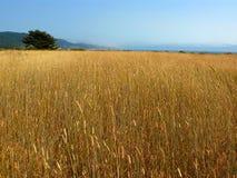Lang grasgebied stock afbeeldingen