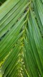 Lang & groen Royalty-vrije Stock Foto