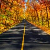 Lang Landelijk Autumn Road Corridor Stock Afbeeldingen