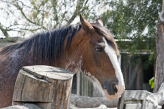 Lang-maned Pferd im Stall Lizenzfreies Stockbild