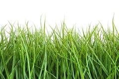 Lang nat gras tegen een wit Stock Fotografie
