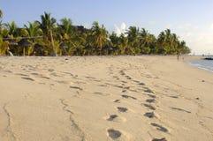 Lang strand Stock Afbeeldingen