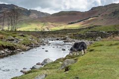 Langdale caiu paisagem, parque nacional do distrito do lago Fotografia de Stock