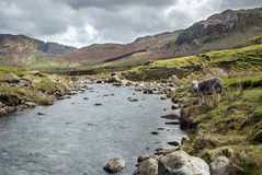 Langdale fiel Landschaft, See-Bezirks-Nationalpark Stockfotos