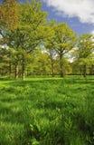 langdale malvern春天木头 库存照片