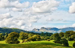 The Langdale Pikes viewed from Latterbarrow Stock Image