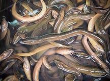 Lange Aale verkauft im Markt für das Kochen Stockfoto