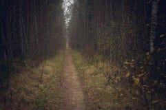 Lange Bahn, die durch Spätherbstwald führt Stockfoto