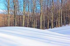 Lange Baumschatten auf den schneebedeckten Hügeln Lizenzfreies Stockfoto