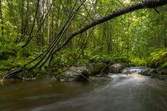 Lange Belichtung des Waldfluss-Herbstes bunt lizenzfreie stockbilder