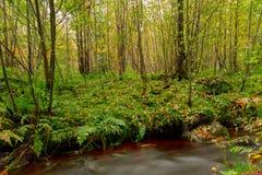 Lange Belichtung des Waldfluss-Herbstes bunt lizenzfreie stockfotos