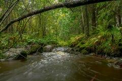 Lange Belichtung des Waldfluss-Herbstes bunt stockfotos