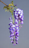 Lange Blüte Stockfoto