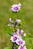 Lange bloem Royalty-vrije Stock Fotografie