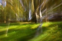 Lange blootstelling die van een bos is ontsproten stock afbeelding