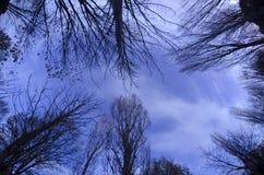 Lange blootstelling van bomen bij dageraad Stock Afbeeldingen