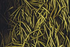 Lange Bohnen Stockbilder