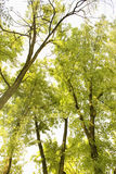 Lange bomen Stock Foto