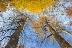 Lange bomen Royalty-vrije Stock Fotografie