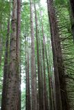 Lange bomen Stock Afbeeldingen
