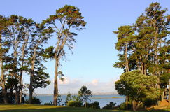 Lange bomen bij Coyle-Park, Punt Chevalier, Auckland Royalty-vrije Stock Foto