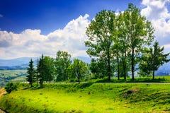 Lange bomen dichtbij weg Stock Afbeelding