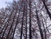 Lange bomen in het bos stock fotografie