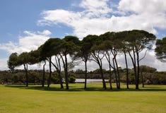 Lange Bomen: Manning Park, Westelijk Australië Royalty-vrije Stock Afbeelding