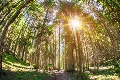 Lange bomen op een bebost gebied met fisheyeeffect stock foto's