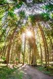 Lange bomen op een bebost gebied met fisheyeeffect stock afbeelding