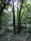 Lange bomen op een rivierbank Stock Foto