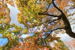 Lange bomen tijdens de herfstperiode Royalty-vrije Stock Afbeeldingen