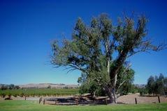 Lange boom in platteland royalty-vrije stock afbeeldingen