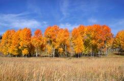 Lange de herfstbomen stock foto
