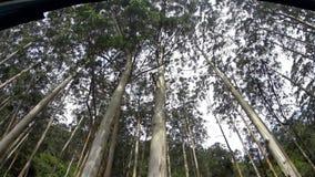 Lange die eucalyptusbomen uit de trein worden verwijderd stock footage