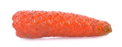 Lange die peper of Pijperlongum op witte achtergrond wordt geïsoleerd Stock Foto